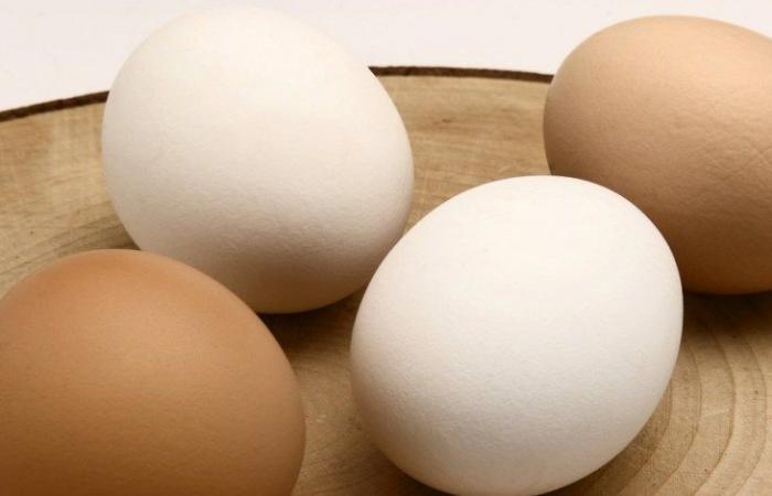 فيديو: انفجار بيضة بيد شرطي اميركي
